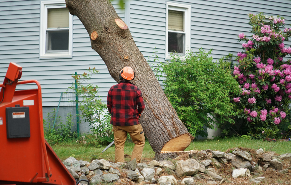 landscaping-tree-removal